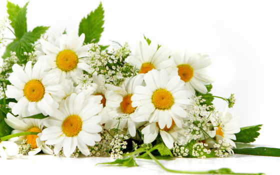 semi, любви, верности, день, днем, postcard, тебе, ромашка, праздник, тебя, всей,