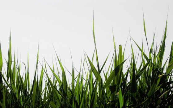 hierba, fondos, godzilla