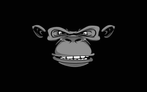 горилла, black, злой