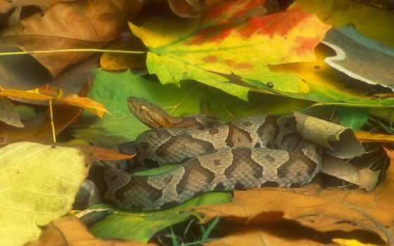 змеи, фотографий