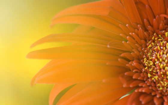 цветы, макро, обоях, добавлено, года, свет, природа, нектар,