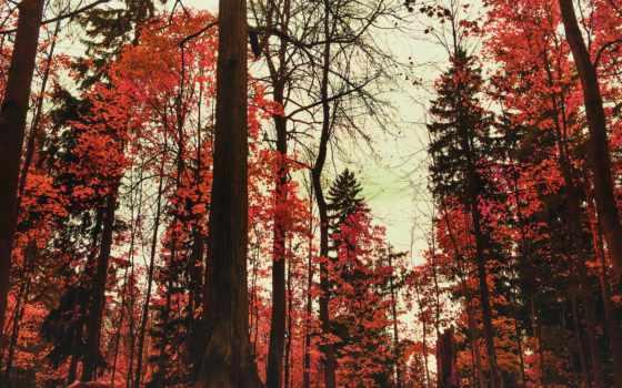 дерево, фильмы,