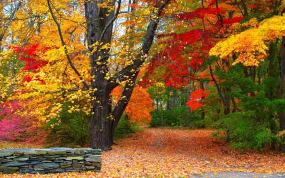 осень, colorful, природа, trees, park, листва,