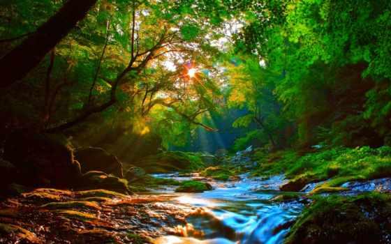 лес, sunshine, утро, best, you, landscape,
