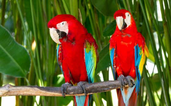 фотообои, winged, острова, тел, животными, зелёный, bali, попугаи, заказать, park, animals,