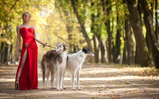 красном, девушка, платье, двумя, собаками, борзыми,