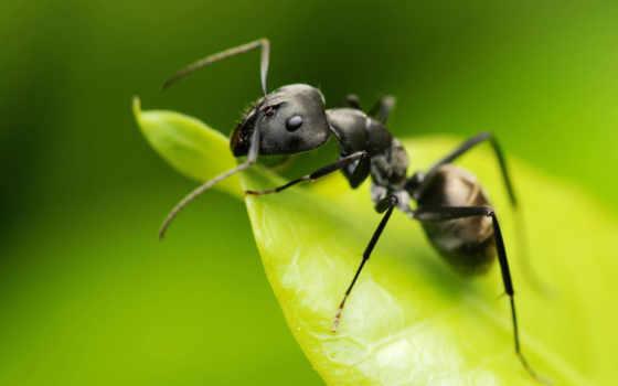 муравьи, ant, муравьев, everything,