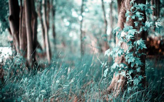 лес, трава, густой, площадь, follow, молодой, aktivist, рассказать, изображение, дерево, который