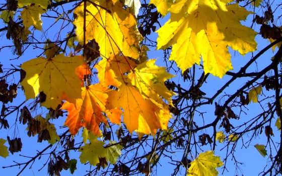 осень золотая, листья