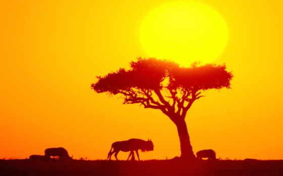 африка, положение, африки, географическое, презентация, материка,