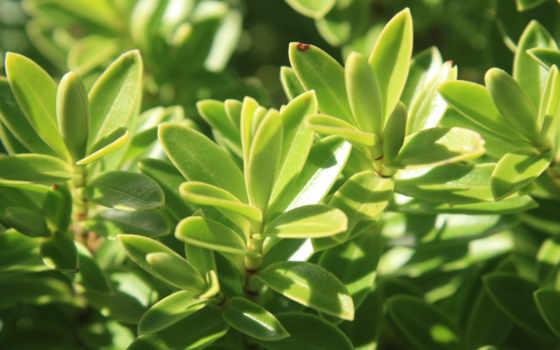 зелёный, листья, растение, free, leaf, макро,