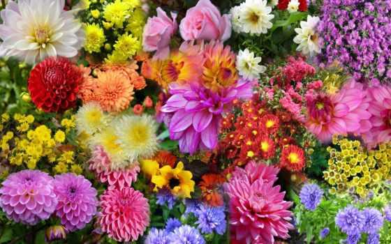 утро, цветы, хорошего
