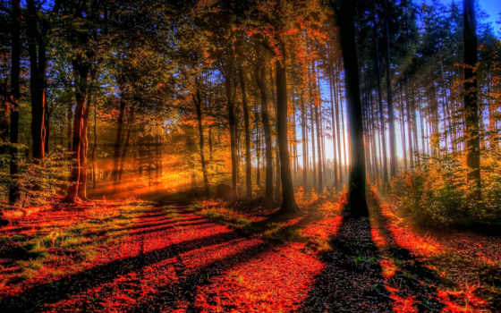 закат, лесу, осеннем