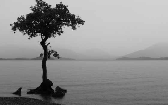 обои, black, white, quot, дерево, одинокое,