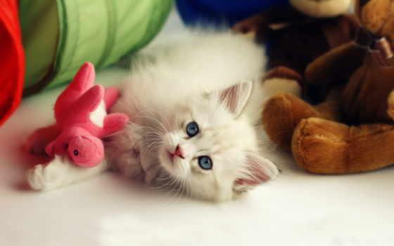 котенок, котята, пушистый