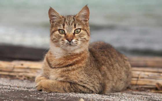 серый кот Фон № 97354 разрешение 1680x1050