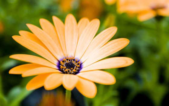 flowers, nice, цветы