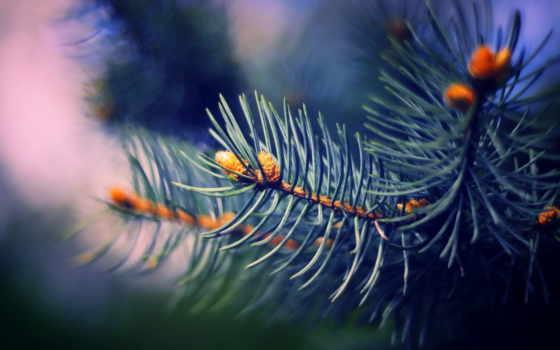 разрешения, высокого, eli, branch, вид, изображения, большого, oboi,