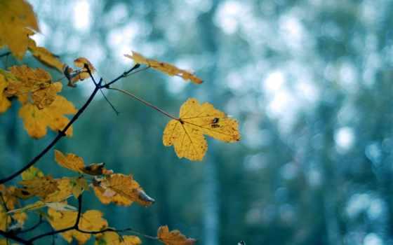 листья, фон, downloads, comments, желтые, дерево, листва,