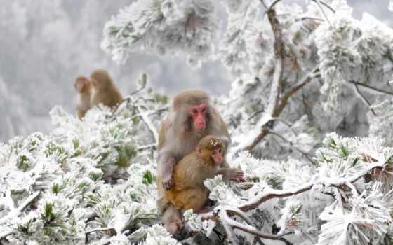 winter, снег, япония, природа, animals, холод,