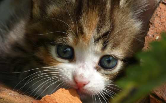 animal, кот, лес, wild, file