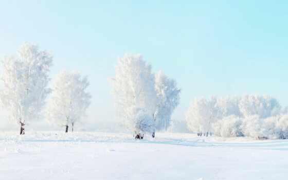 winter, дерево, снег, день, лес, красивый, иней, landscape, white
