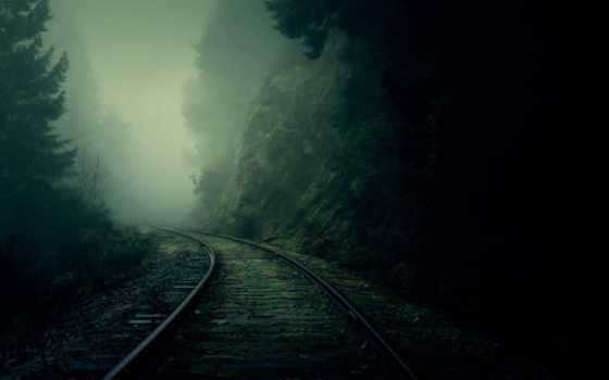 туман, лес Фон № 22489 разрешение 2560x1600