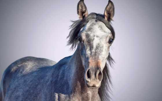 лошади, клубе, лошадей