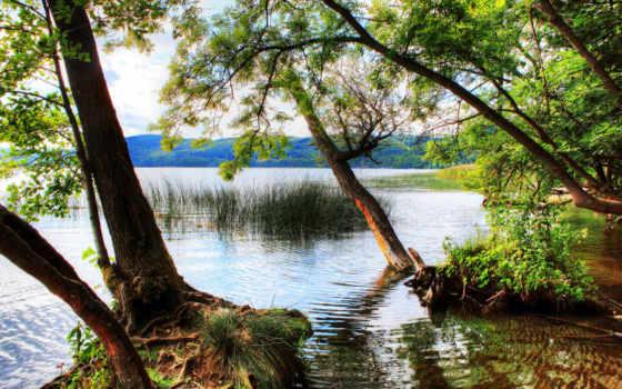природа, деревья, германия