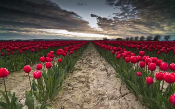 цветы, найти, войдите