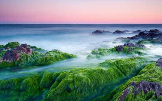 камни, испарение, водоросли, steam, море, нояб, утро, дымка, cool,