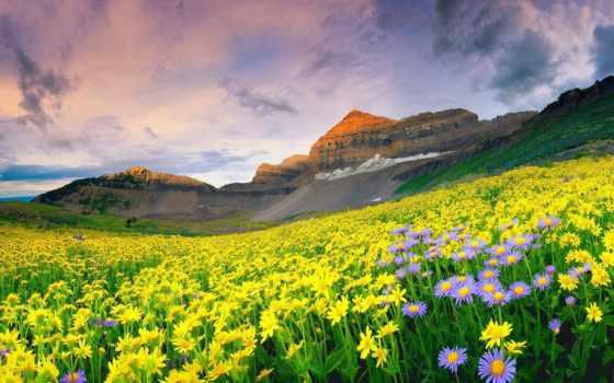 долина, flowers, uttarakhand
