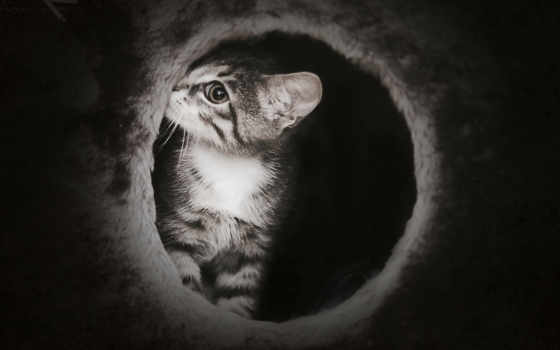 кот, темно, котенок