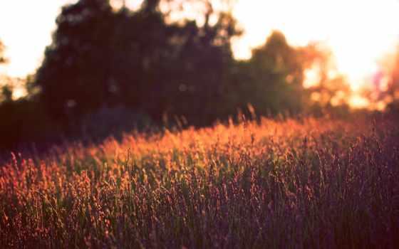summer, вечер, природа, поле, cvety, закат, разное,