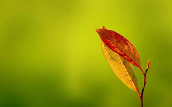 природа, макро, miscellaneous, desktop, free, фон, листья,