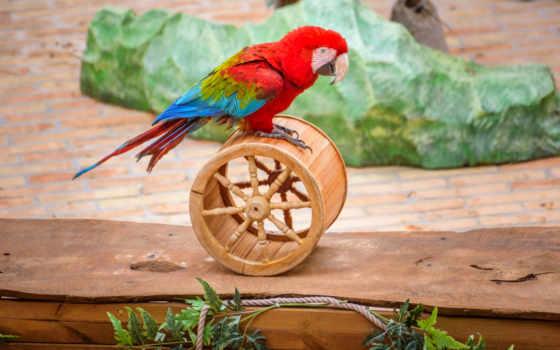 фотографий, фон, попугай