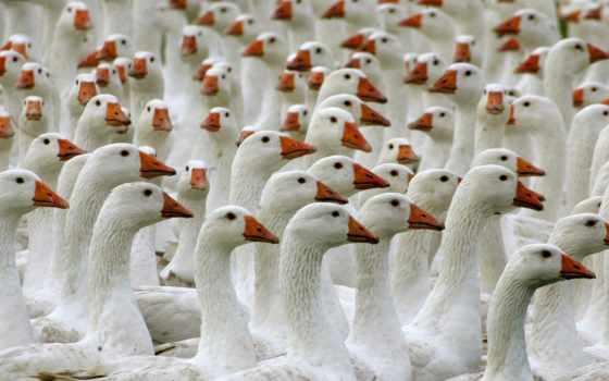 instagram, views, images, profile, американский, bing, pelican, ди, white,