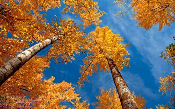 вышивки, autumn