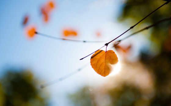 макро, свет, осень, блики, лист, ветки,