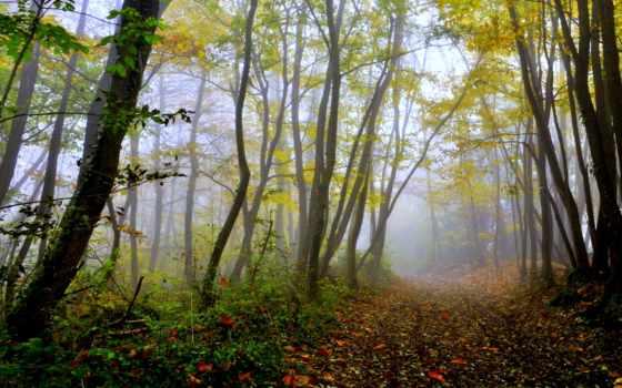 осень, деревья, трек