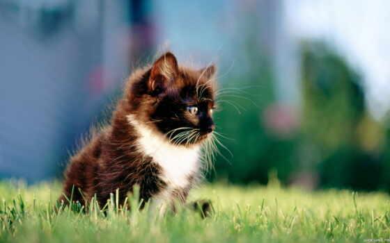 kittens, котенок, телефон