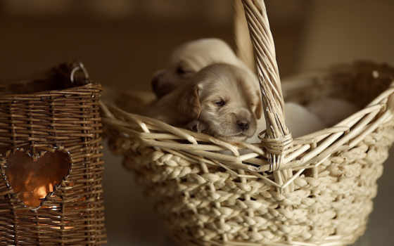 animals, desktop, cute, widescreen, images, animal, dogs,