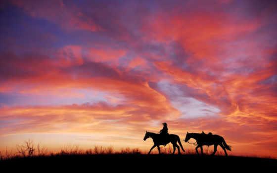 images, free, háttérképek, лошадь, ingyenes, letöltése, horses,