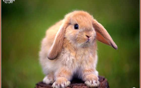 кролик, декоративный, пень,