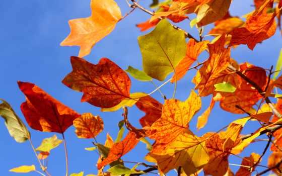 листья, осень Фон № 33569 разрешение 2560x1600