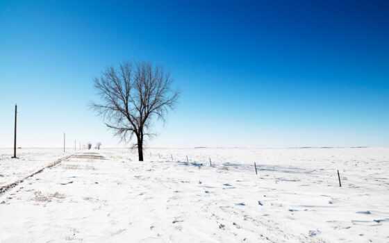 winter, снег, дерево