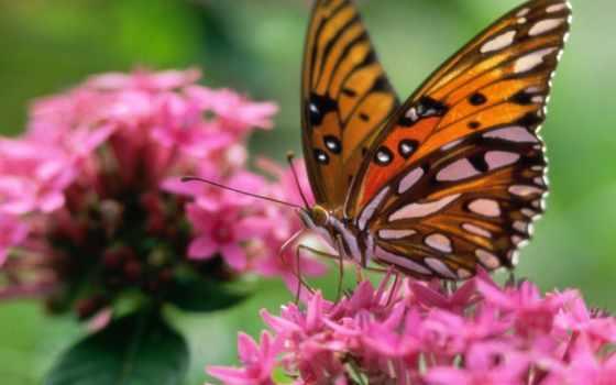 бабочки, красивые, бабочек