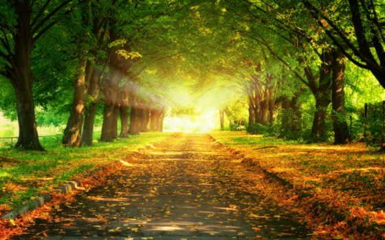 солнца, ray, свет, аллея, trees, sun, трек, осень, park, листва,
