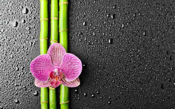 орхидея, бамбук, цветы, капли, подробнее,