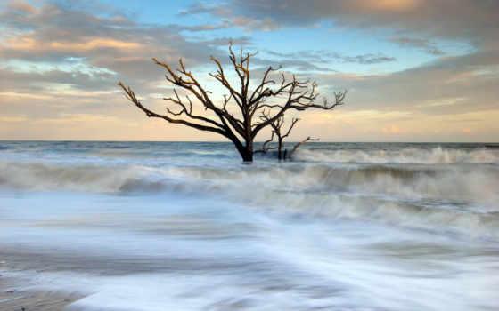 drzewo, morze, suche